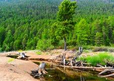 Ποταμός βουνών στη λίμνη Baikal Στοκ Εικόνες