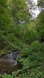 Ποταμός βουνών στη θερινή ημέρα Στοκ Φωτογραφίες