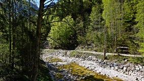 Ποταμός βουνών στις Άλπεις Στοκ Εικόνα