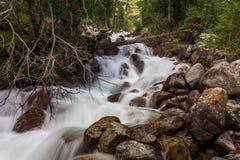 Ποταμός βουνών στους δασικούς καταρράκτες και καταρράκτης στα βουνά Στοκ εικόνες με δικαίωμα ελεύθερης χρήσης