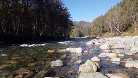 Ποταμός βουνών το καλοκαίρι, τοπίο της φύσης, άποψη του ρεύματος, άποψη ποταμών από την ακτή φιλμ μικρού μήκους