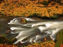 Ποταμός βουνών φθινοπώρου με τα θολωμένα κύματα, φρέσκες πράσινες mossy πέτρες, ζωηρόχρωμη πτώση Στοκ Φωτογραφίες