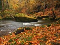 Ποταμός βουνών φθινοπώρου με τα θολωμένα κύματα, φρέσκες πράσινες mossy πέτρες, ζωηρόχρωμη πτώση Στοκ Εικόνες
