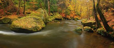 Ποταμός βουνών φθινοπώρου με τα θολωμένα κύματα, φρέσκες πράσινες mossy πέτρες, ζωηρόχρωμη πτώση Στοκ Εικόνα
