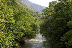 Ποταμός βουνών Cerna στην άνοιξη, Herculane, Ρουμανία στοκ εικόνες με δικαίωμα ελεύθερης χρήσης