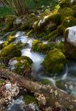 ποταμός βρύου Στοκ Φωτογραφία
