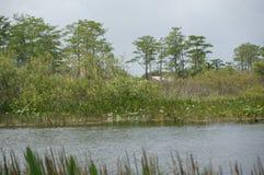 Ποταμός ελών της νότιας Φλώριδας Στοκ Φωτογραφίες