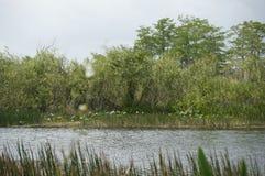 Ποταμός ελών της νότιας Φλώριδας Στοκ φωτογραφίες με δικαίωμα ελεύθερης χρήσης