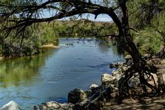Ποταμός ερήμων που πλαισιώνεται από το δέντρο Στοκ Φωτογραφία