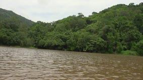 Ποταμός ζουγκλών και δασικά δέντρα απόθεμα βίντεο