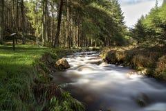 ποταμός κίτρινος Στοκ εικόνες με δικαίωμα ελεύθερης χρήσης