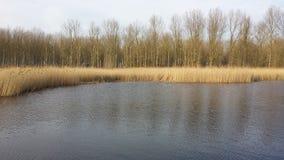Ποταμός και δάσος Στοκ Εικόνες