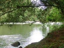 Ποταμός και δάσος Στοκ Εικόνα