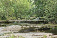 Ποταμός και βλάστηση Στοκ Εικόνες