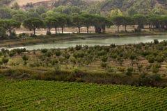 Ποταμός και ελιές στην Τοσκάνη στην Ιταλία Στοκ Εικόνες