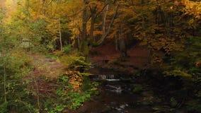 Ποταμός και καταρράκτης βουνών στο δασικό πέτρινο τύμβο φθινοπώρου απόθεμα βίντεο