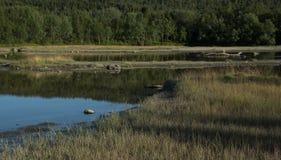 Ποταμός και ξύλο Στοκ φωτογραφία με δικαίωμα ελεύθερης χρήσης