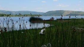 Ποταμός και τα βουνά, η άποψη μέσω της βλάστησης απόθεμα βίντεο