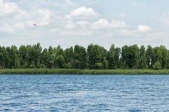 Ποταμός κατά μήκος των ξύλων Στοκ φωτογραφία με δικαίωμα ελεύθερης χρήσης