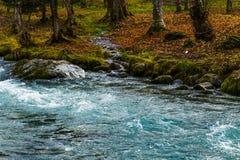 Ποταμός με τα δέντρα Στοκ φωτογραφία με δικαίωμα ελεύθερης χρήσης