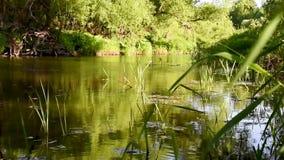 Ποταμός με τα αργά τρέχοντα και πράσινα δέντρα απόθεμα βίντεο