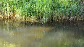 Ποταμός με τα αργά τρέχοντα και πράσινα δέντρα φιλμ μικρού μήκους