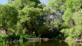 Ποταμός με την αργή ροή των πράσινων δέντρων απόθεμα βίντεο