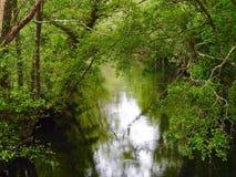 Ποταμός με τη βλάστηση Στοκ εικόνες με δικαίωμα ελεύθερης χρήσης