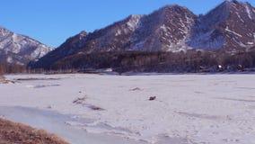 Ποταμός παγετού στο βουνό Altai Χειμώνας, κρύος καιρός απόθεμα βίντεο