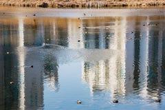 ποταμός παπιών στοκ εικόνα με δικαίωμα ελεύθερης χρήσης
