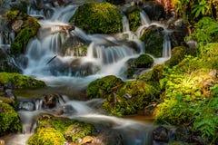 ποταμός πολιτεία της Washington που ρέει πέρα από τους mossy βράχους στοκ φωτογραφία με δικαίωμα ελεύθερης χρήσης