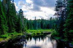 Ποταμός που περιβάλλεται από τα κωνοφόρα Στοκ Εικόνες