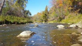 Ποταμός που ρέει με τους λίθους κοντά στην ακτή το φθινόπωρο απόθεμα βίντεο