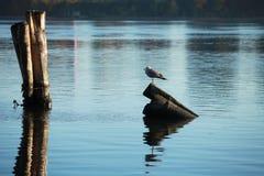 Ποταμός πρωινού Στοκ εικόνες με δικαίωμα ελεύθερης χρήσης