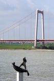 Ποταμός Ρήνος, γέφυρα αναστολής και τέχνη γλυπτών Στοκ εικόνες με δικαίωμα ελεύθερης χρήσης