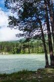 ποταμός Ρωσία Σιβηρία περιοχών altai katun Στοκ φωτογραφίες με δικαίωμα ελεύθερης χρήσης