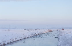 Ποταμός σε ένα χιονώδες τοπίο με τα πετώντας πουλιά Στοκ Εικόνες