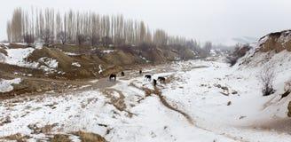 Ποταμός στα χειμερινά βουνά του Καζακστάν Στοκ φωτογραφίες με δικαίωμα ελεύθερης χρήσης