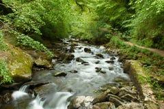 Ποταμός στην αγγλική δασώδη περιοχή στο Devon Στοκ φωτογραφία με δικαίωμα ελεύθερης χρήσης