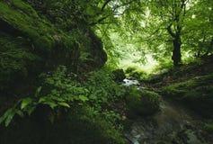Ποταμός στην πράσινη ζούγκλα Στοκ εικόνα με δικαίωμα ελεύθερης χρήσης
