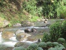 Ποταμός στη βροχή της Κόστα Ρίκα Στοκ εικόνες με δικαίωμα ελεύθερης χρήσης