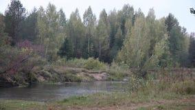 Ποταμός στη βροχή απόθεμα βίντεο