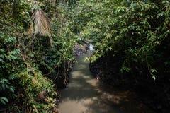 Ποταμός στη ζούγκλα στοκ εικόνες με δικαίωμα ελεύθερης χρήσης