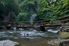 Ποταμός στη ζούγκλα στοκ εικόνα με δικαίωμα ελεύθερης χρήσης