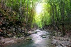 Ποταμός στο δάσος βουνών Στοκ εικόνες με δικαίωμα ελεύθερης χρήσης