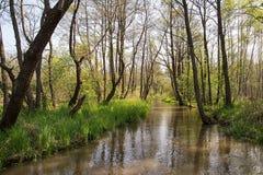 Ποταμός στο δάσος Στοκ εικόνα με δικαίωμα ελεύθερης χρήσης