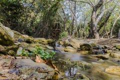 Ποταμός στο δάσος Στοκ Φωτογραφίες