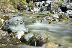 Ποταμός στο δάσος Στοκ εικόνες με δικαίωμα ελεύθερης χρήσης