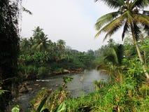 Ποταμός στο δασικό εθνικό πάρκο Sinharaja στοκ φωτογραφίες