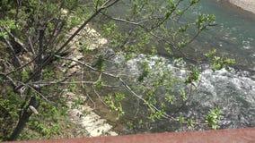 Ποταμός στο νησί απόθεμα βίντεο